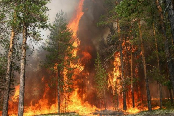 Число жертв крупного лесного пожара в Португалии возросло до 62 человек