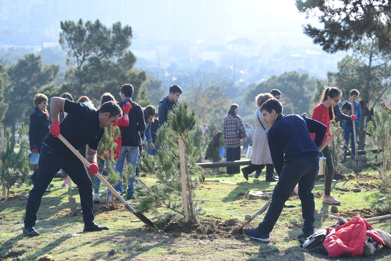 В Азербайджане посажено более 650 000 деревьев