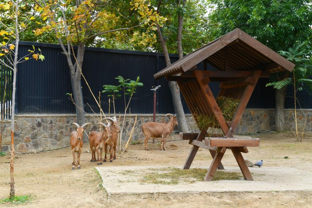 Состоялось Бакинского зоопарка после реконструкции